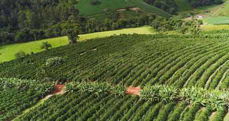 Aerial image coffee plantation, coffee farm