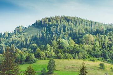 Foto op Plexiglas Blauwe jeans Mysterious foggy coniferous forest