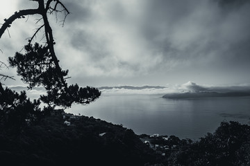 Fotomurales - Wellington in a foggy morning; black and white style