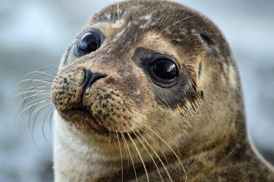 scotland wildlife beach photography seal