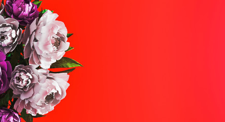 Poster Bloemen Red floral background with white and purple peonies on side. Women's Day, Floral background concept. Spring time concept. Invitation, greeting card. Mockup. 3d rendering