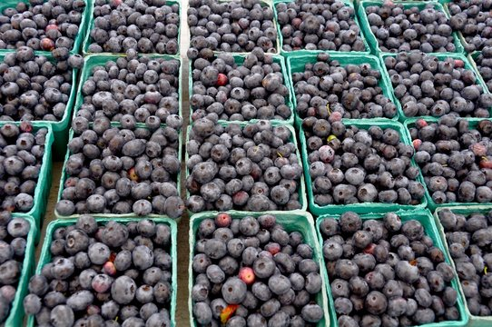 Blueberries For Sale by the Pint