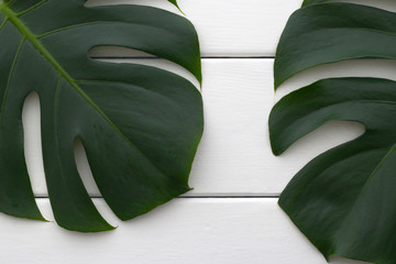 Leaves from a Swiss Cheese Plant (Monstera Deliciosa) on a rough white wooden table. Background image.