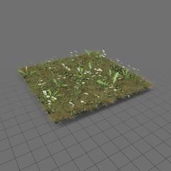 Daisy meadow patch