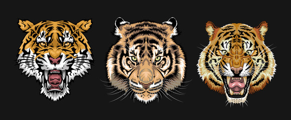 Tiger vector set collection graphic clipart design