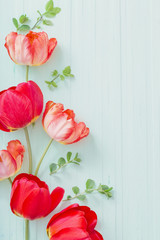 red tulips on green wooden background