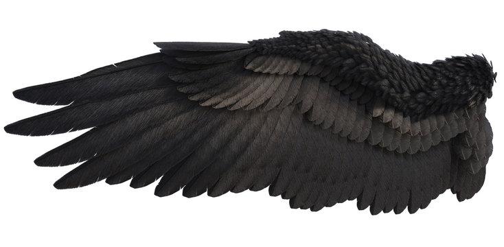 3D Rendered Fantasy Angel Wings on White Background - 3D Illustration