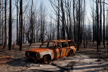 A burned car stands amid dead trees after a wildfire destroyed the Kangaroo Valley Bush Retreat in Kangaroo Valley