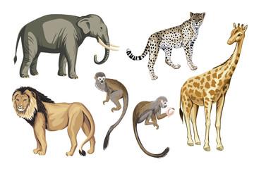 Safari vintage wild animals clip art. Lion, elephant, giraffe, leopard, monkey wildlife set.