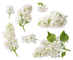Photo sur Toile Lilac Set of blooming lilac. Branches of lilac flowers isolated on white background.