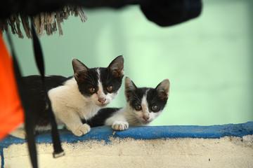Katzenfamilie, Katzenbaby