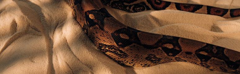 Panoramic shot of snake with sunlight on textured sand