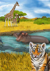 cartoon scene with hippopotamus hippo swimming in river near the meadow and giraffes resting illustration for children