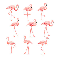 Set of flamingo birds elements. Collection of flamingos on a white background. Tropical birds collection. Pink flamingos set for summer print bundle. Vector illustration bundle.