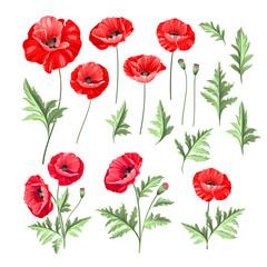 Obraz Hand drawn style set of white poppy, botanical illustration of flowers isolated on a white background. White poppies collection. Vector illustration. - fototapety do salonu