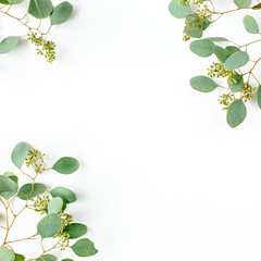 Frame borders made of eucalyptus leaves with fruits in the form of berries on white background....