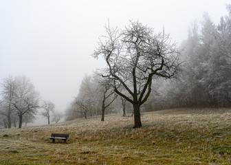 Fotoväggar - tree in fog