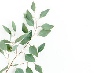 Poster Vegetal Eucalyptus branch isolated on white background. Flat lay, top view. floral concept