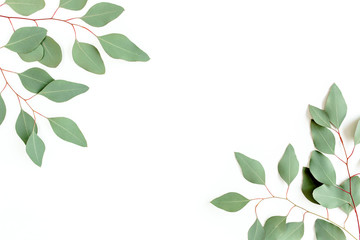 Wall Mural - Leaves eucalyptus frame borders on white background with empty space for text. Flat lay, top view. floral concept