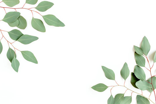 Leaves eucalyptus frame borders on white background with empty space for text. Flat lay, top view. floral concept