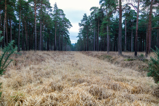 Firebreak amongst the trees in the New Forest, Hampshire in England, UK