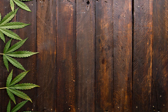 Cannabis green leaves on wooden backdrop