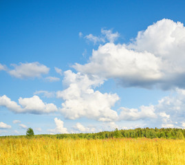 Wall Mural - Field and forest, sky with clouds.