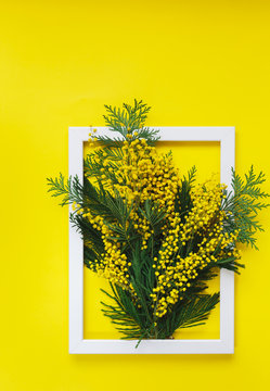 Mimosa twigs with flowers and leaves in a frame photo on bright yellow background. Spring and Easter  Frame Concept. Flat lay. Blank Space