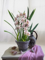 Still life with cymbidium orchid in a basket on a white background