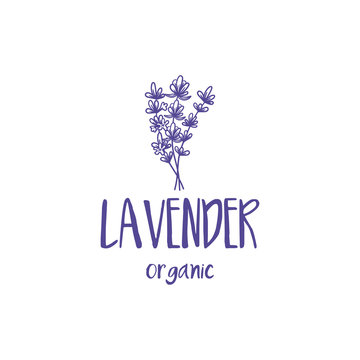 Template logo design of beautiful abstract lavender flower. Vector illustration