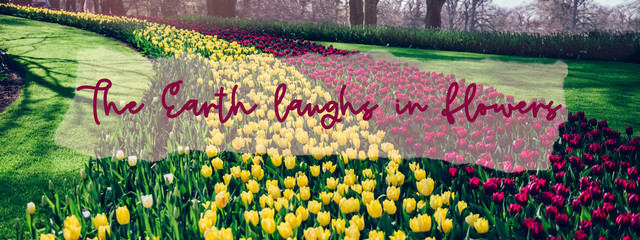 Fotobehang Tulp The Earth laughs in flowers phrase in the frame. Flowerbeds of blossoming tulips during spring. One of the world's largest flower gardens in Lisse, the Netherlands. Banner size