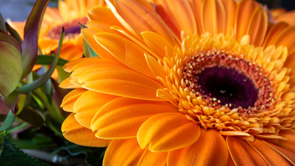 In de dag Gerbera Blumenstrauß mit orange Gerbera Teilaufnahmen