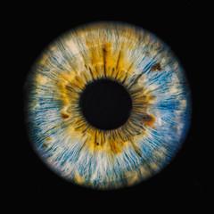 Papiers peints Iris human iris