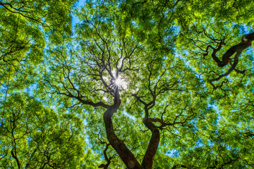 Poster Buenos Aires Subtropical forest, Lezama Park, Buenos Aires, Argentina