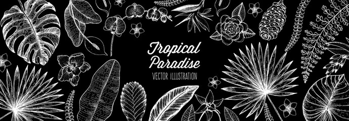 Tropical palm leaves design template. Floral illustration. Vector illustration leaves and flowers of palm frame. Tropical leaves and flowers collection. Botanical set vector illustration