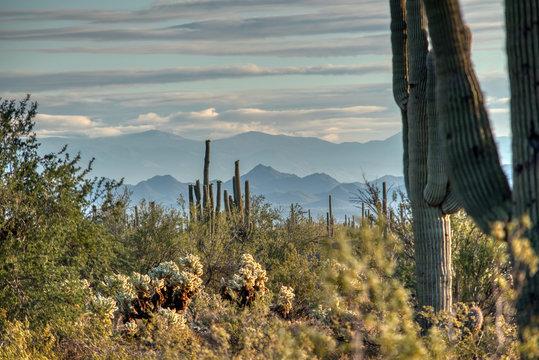 White Tank Mountain State Park Near Phoenix Arizona