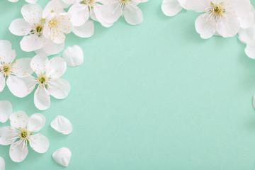 Fototapeta cherry flowers on paper background obraz