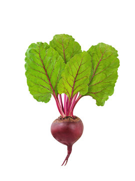 Beetroot isolated. Fresh raw beet with green leaves isolated on white background