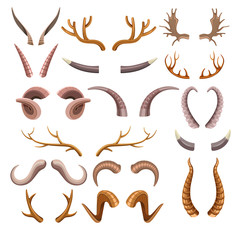 Horns collection with colorful hunting trophies of animals
