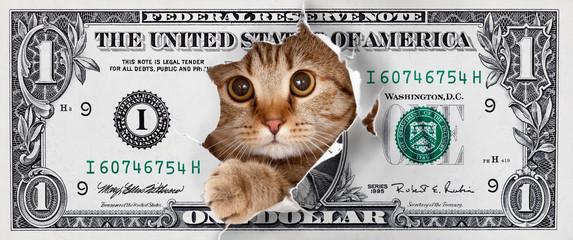 Papier Peint - Funny money one cat dollar design