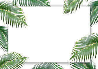 Tropical palm leaves frame on white paper background , Minimal nature , Summer Styled , Flat lay , free space for your text