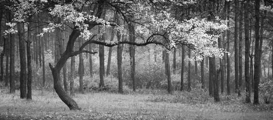 Aluminium Prints Dark grey Dance of autumn. Monochrome colors