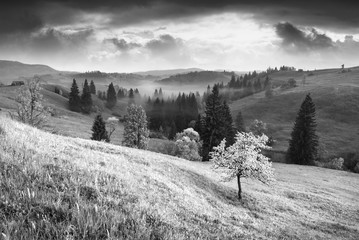 Flowering tree on a hill. Black and white