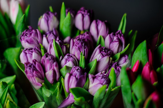 Beautiful bouquet of purple tulips with a green leaves