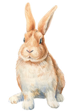 Bunny on an isolated white background, watercolor illustration, cute animal, easter bunny.