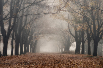 Fog in the autumn park, yellow leaves on the ground.