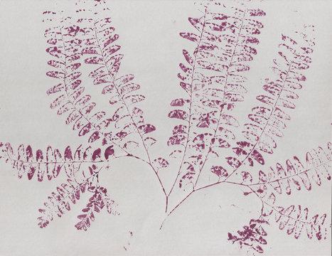 Botanical art printed plant, garden fern in purple