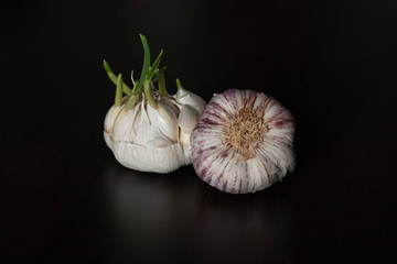 White and purple garlic head on a black background Wall mural