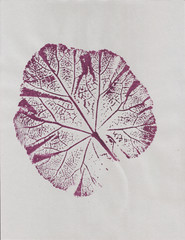 Botanical art printed plant, leaf in purple