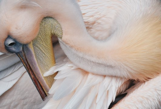 High Angle View Of Pelican